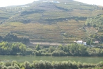 Oporto Vineyards in Douro River (Portugal)